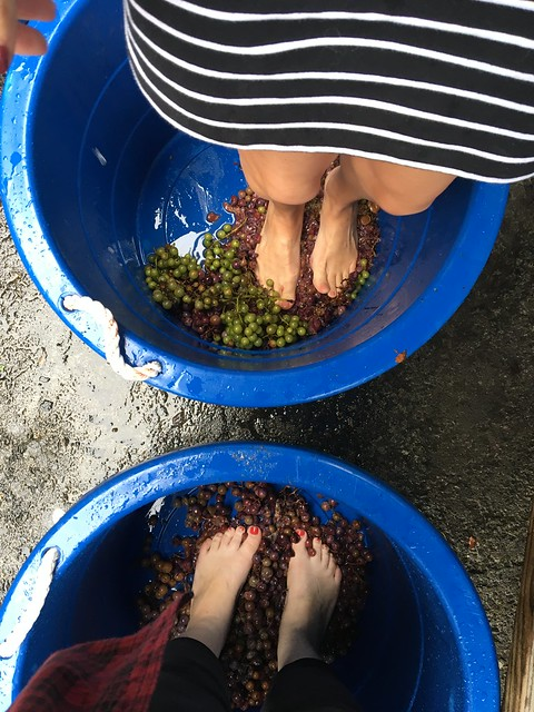 Kirk wood Winery Grape Stomping Festival