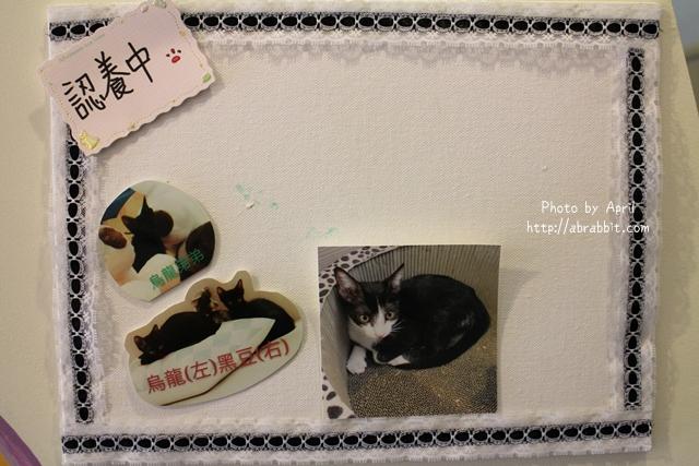 29979451161 9764d832d1 z - 【熱血採訪】[台中]朵喵喵咖啡館--愛貓人士請進,這裡是貓咪中途之家、台中貓餐廳、貓咖啡廳@東區 自由路(已歇業)