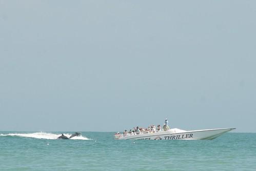 Sanibel Island Cruise Tours