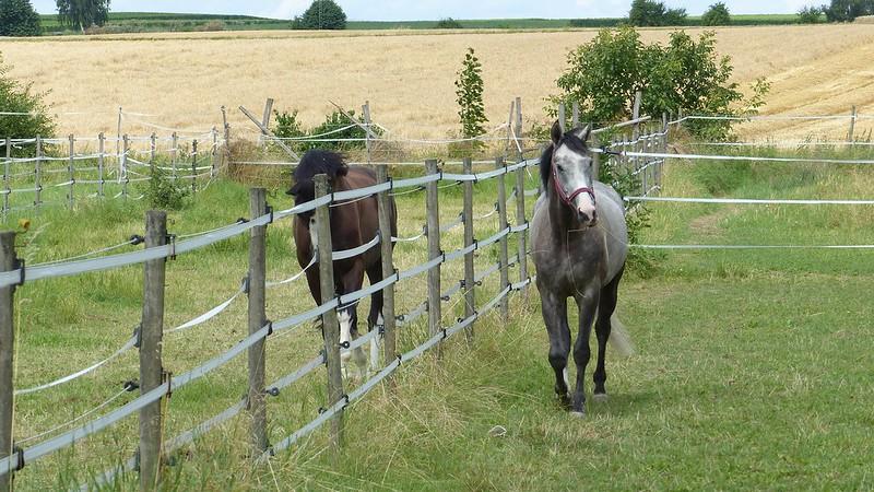 Pferdekoppeln bei Framersheim