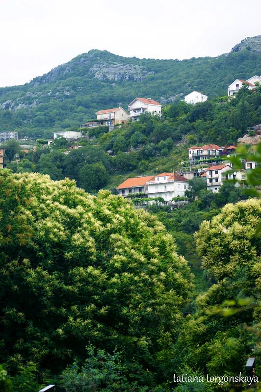 Пейзаж с каштановыми деревьями