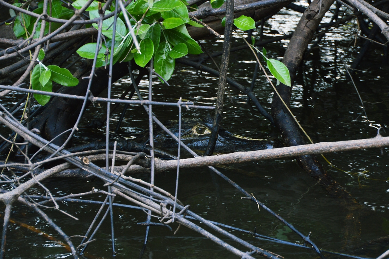 pantanal35