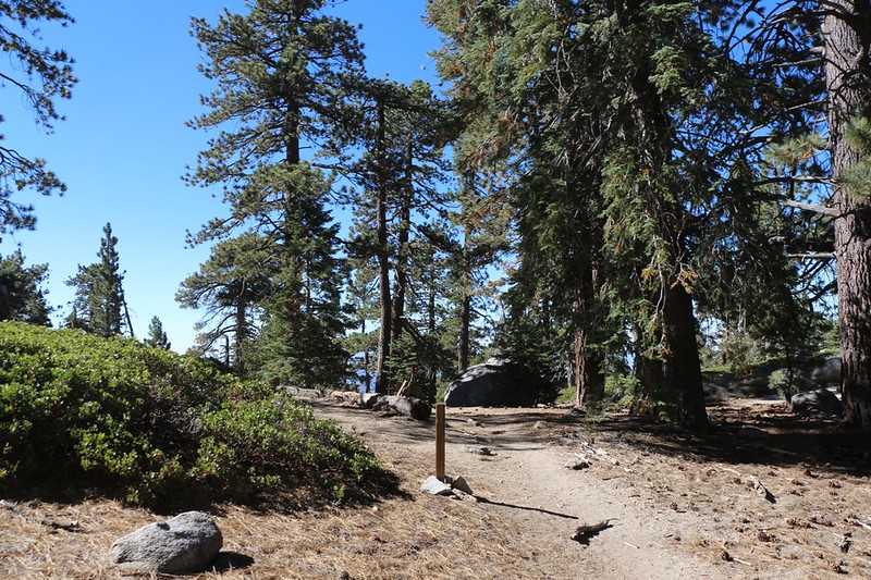 Strawberry Junction on the Pacific Crest Trail