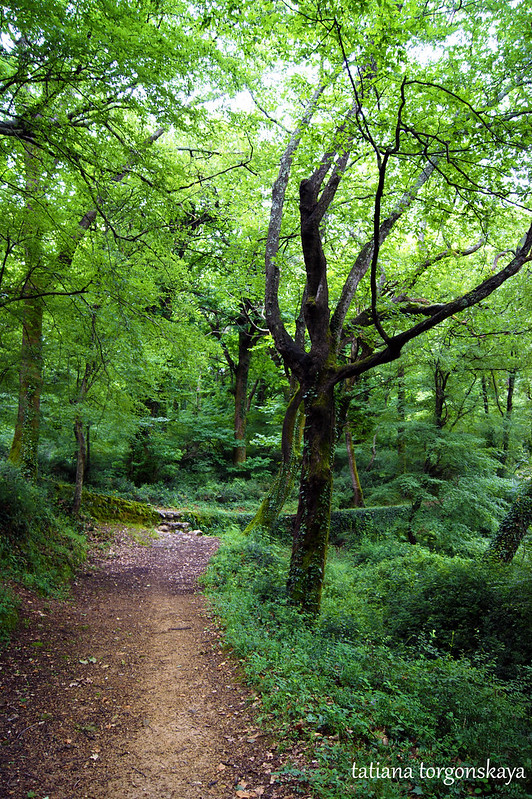 Июньский зеленый лес