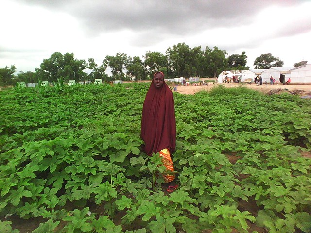 Vegetable production in Northeast Nigeria