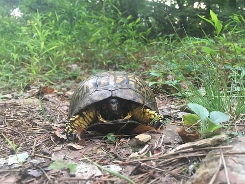 Close up turtle portrait