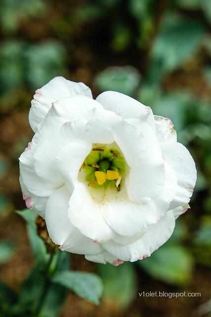Bunga5-0285crw