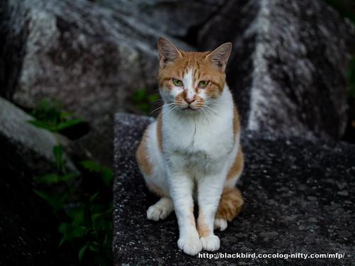 Cat #03