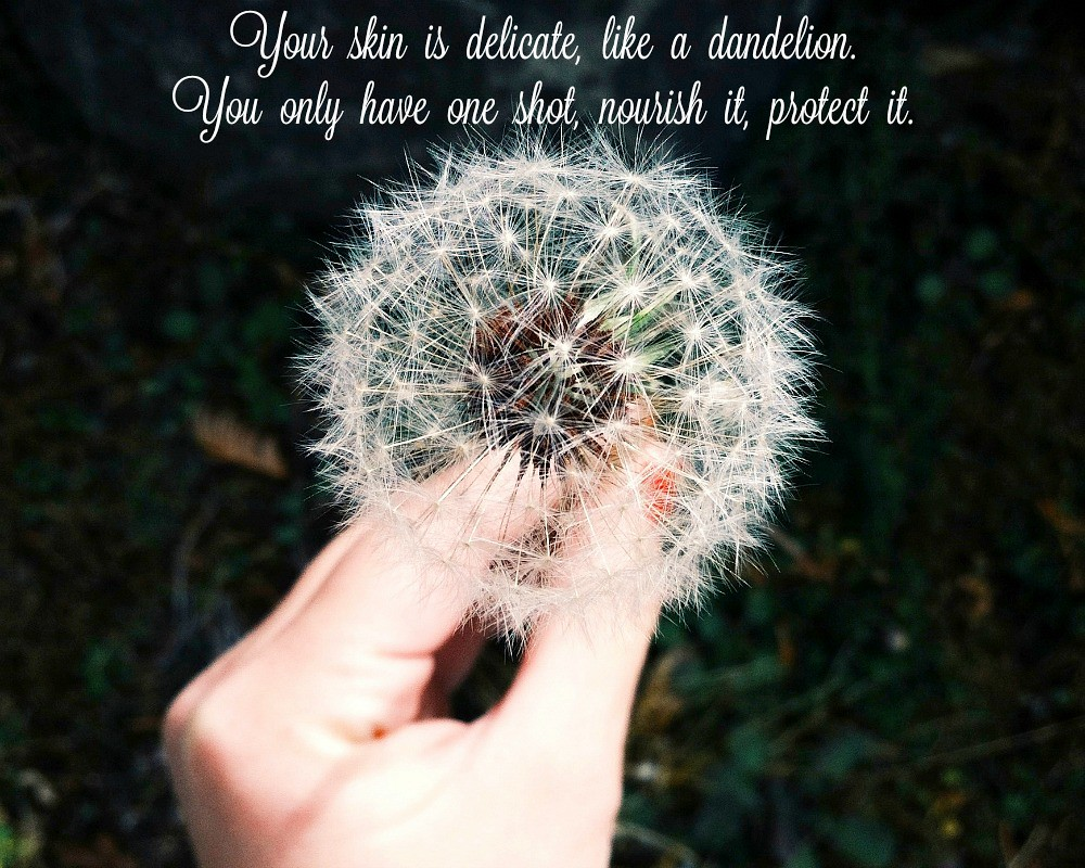 delicate as dandelion2