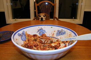 189/365/1650 (December 17, 2012) - Flapjack at the Dinner Table | by cseeman