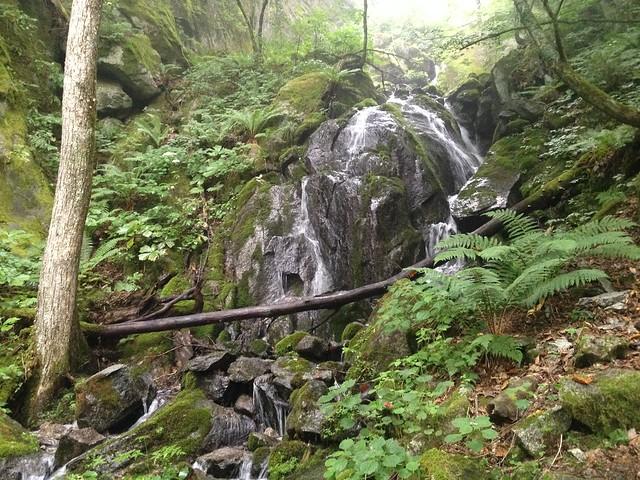 鳳凰山 ドンドコ沢 滝