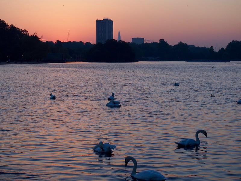 swan-dawn-2