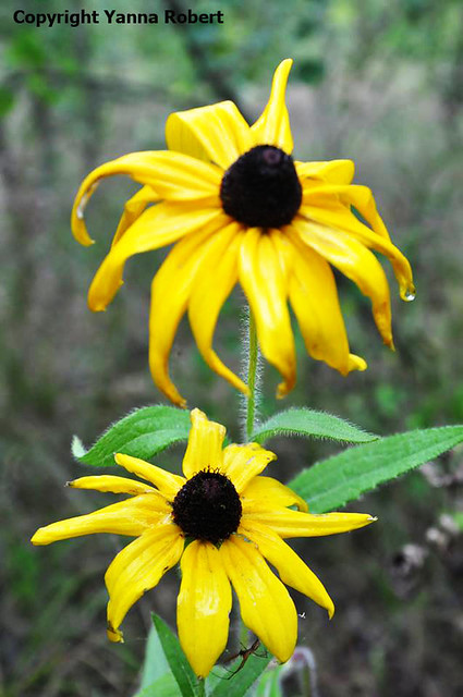 PRIPYAT fleurs