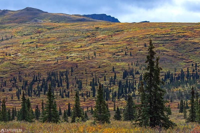 Nature - Denali National Park
