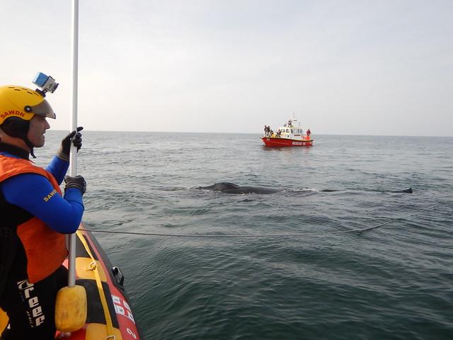 Whale Disentanglement off False Bay 28.08.2016