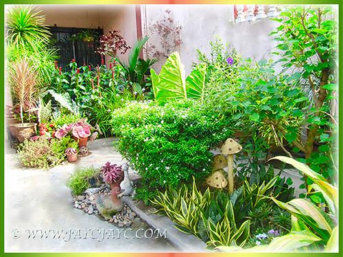 our tropical garden at the frontyard 2 sept 2016 - Tropical Garden 2016