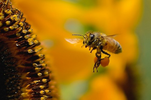 蜂 刺され