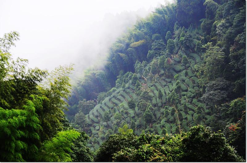 忘憂森林的綠 (4)
