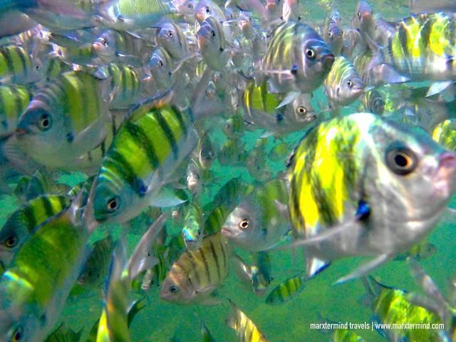 Snorkelling Krabi
