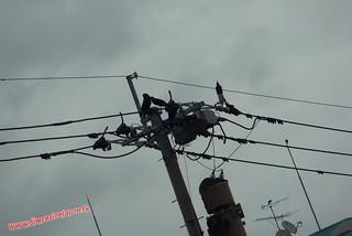 P1060771 Cables y cuervos, Hacia la estacion de Tojinmachi (Fukuoka) 14-07-2010