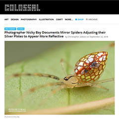 Photographer Nicky Bay Documents Mirror Spiders Adjusting their Silver Plates to Appear More Reflective