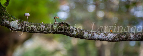 Parque Natural de #Gorbeia #DePaseoConLarri #Flickr      -1362