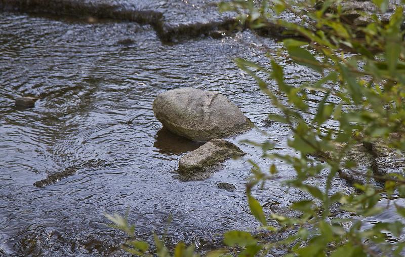 rocky turtle