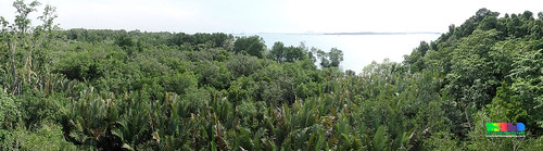 View from Jejawi Tower, Chek Jawa boardwalk