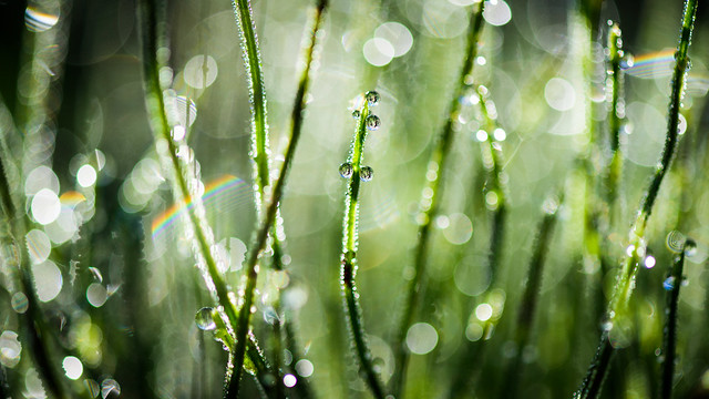 Dewdrops and Rainbows