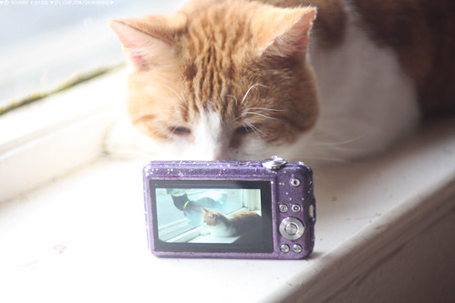 (A PHOTO OF ROMEO WITH A PHOTO OF ROMEO) | by chimidoro
