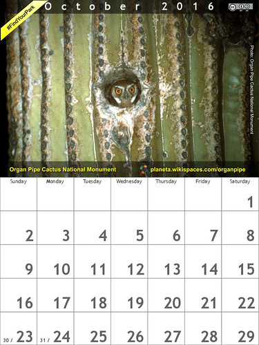 October 2016 #FindYourPark Calendar featuring @OrganPipeNPS: Organ Pipe Cactus National Monument: Elf owl in a saguaro hole