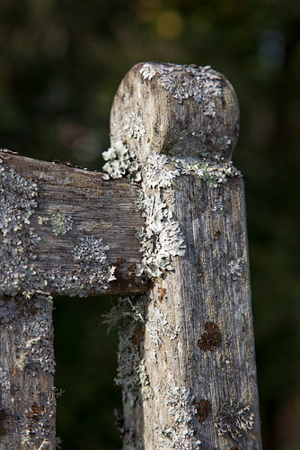 Lichen on Wooden Chair | by stayinwales
