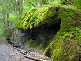 Rocks surrounded by lush green Moss | by Batikart