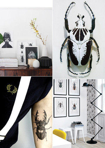 trendspotting: Beetles & insects | by AMM blog