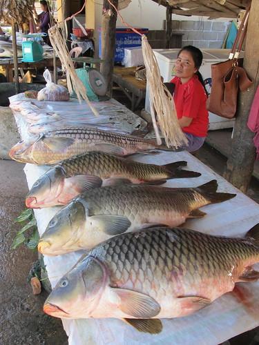 Img 0252 flickr photo sharing for White fish market