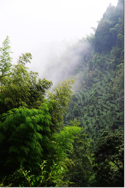 忘憂森林的綠 (5)
