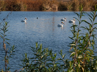 Sepulveda Basin Wildlife Area | by U.S. Army Corps of Engineers