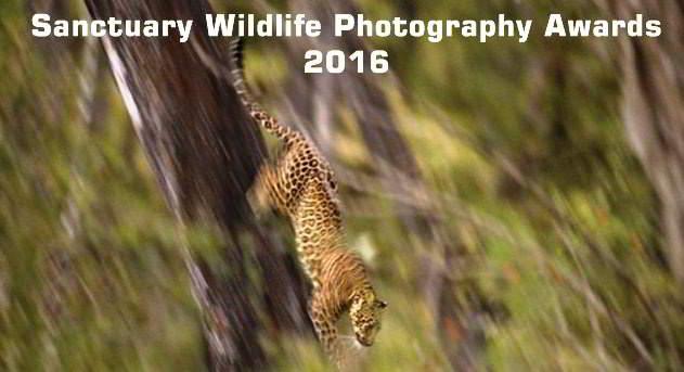 sanctury wildlife awards
