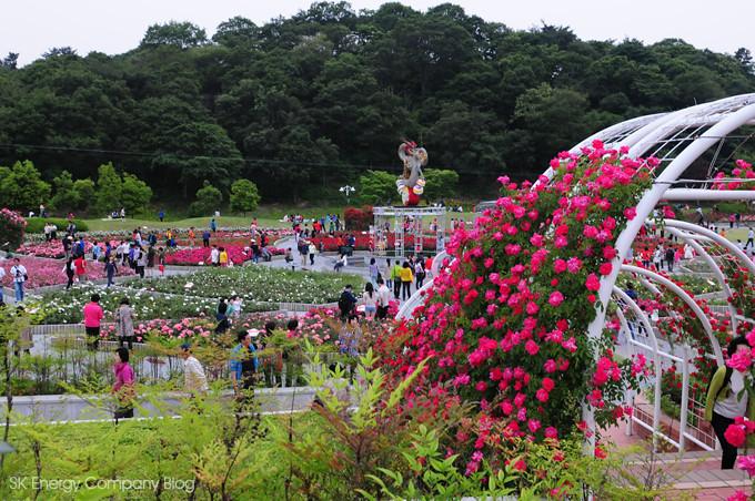 울산대공원 장미축제