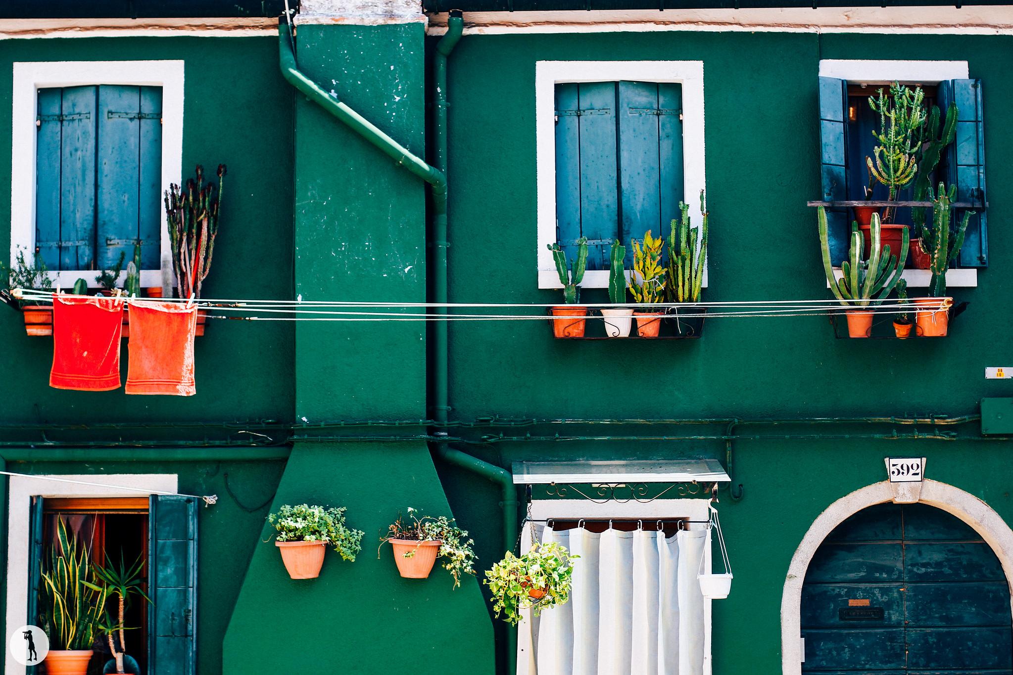 Voyage. Burano, Italie. Cactus