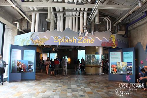 160703d Splash Zone and Penguins _01