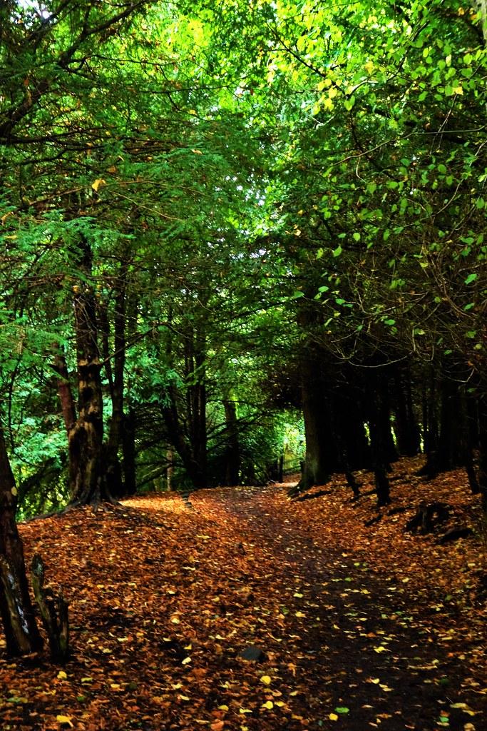 Woodland Walk at Rouken Glen, Glasgow