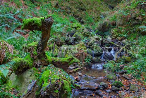Parque Natural de #Gorbeia #DePaseoConLarri #Flickr      -1453