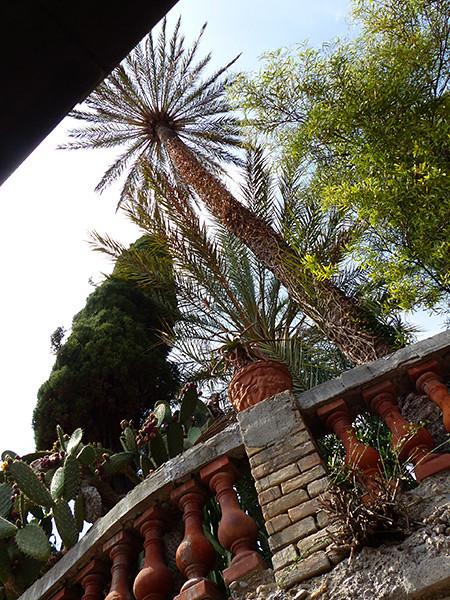 cactus et palmiers