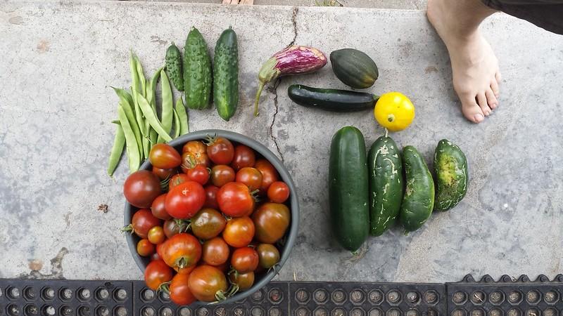 Weekly garden harvest