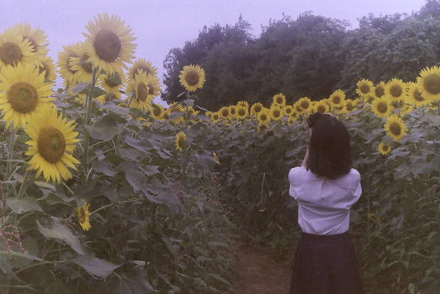 Sunflower and wife