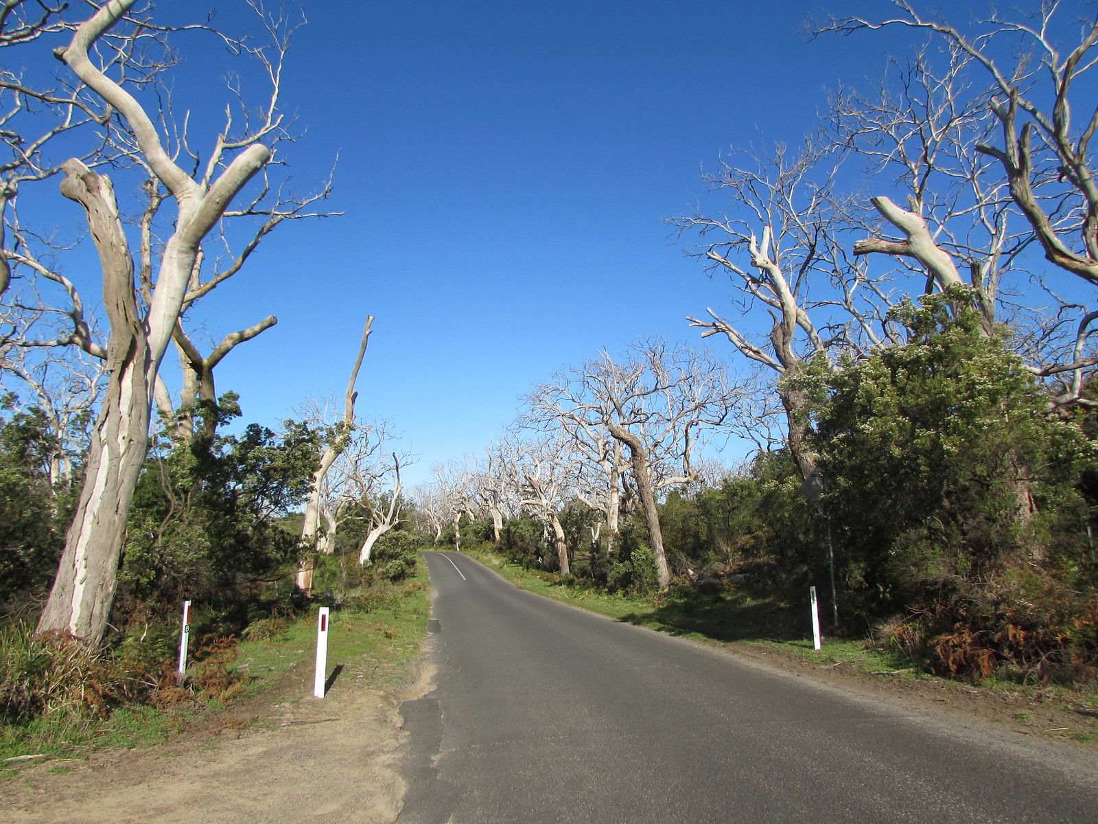 In Cape Otway, the scenery reminded me of the drive along the Northern Rim of the Grand Canyon a few years back