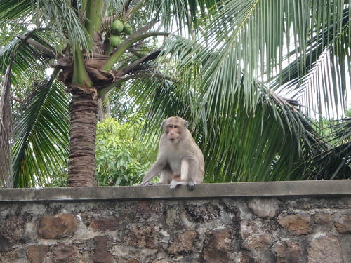 kep-monkeys-2