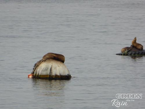 160702h Old Fishermans Warf Monterey _11