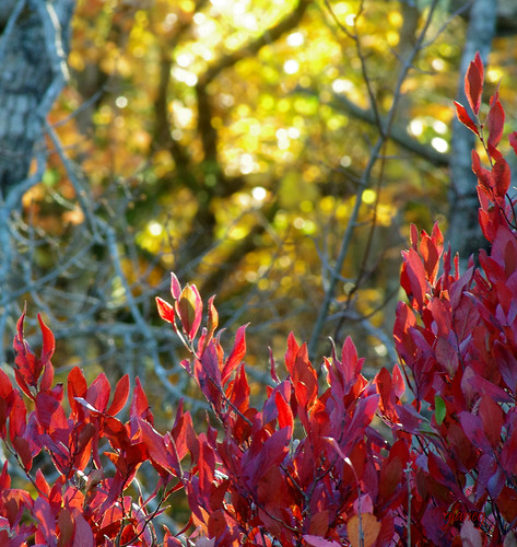 Autumn Embers | by photo fiddler